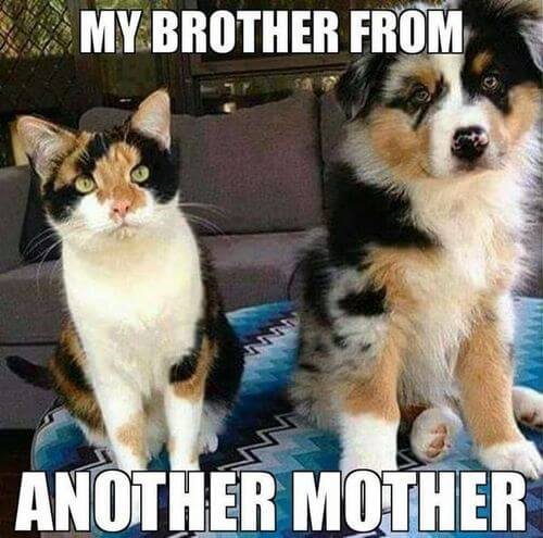 dog and cat memes 7