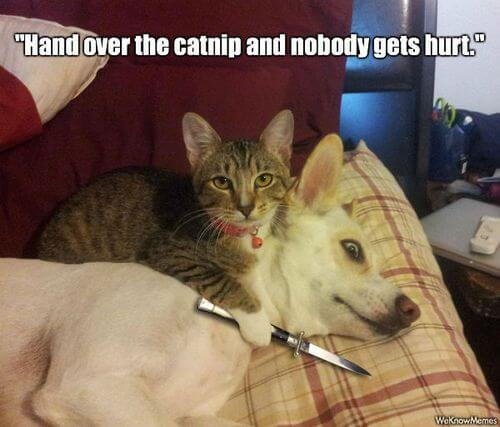dog and cat memes 8
