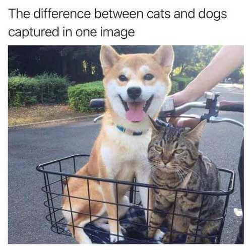 dog and cat memes 9
