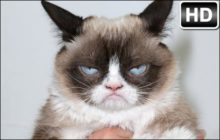 Grumpy Cat HD Wallpapers New Tab Themes