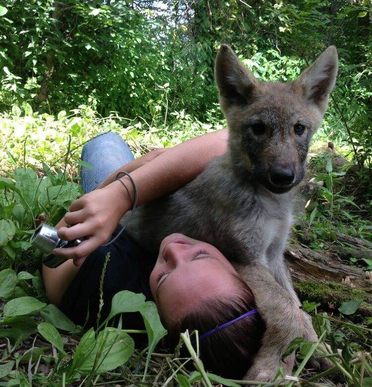 can wolf make great pet 5