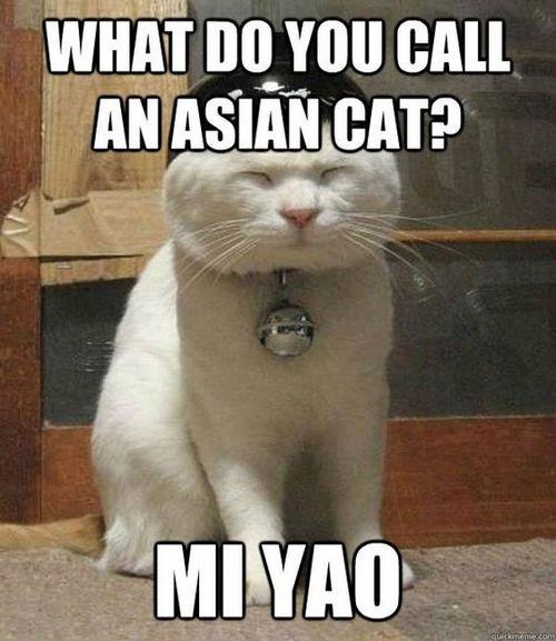 cat memes 11