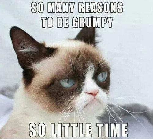 cat memes 12