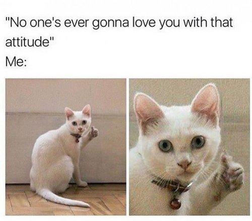 cat memes 14
