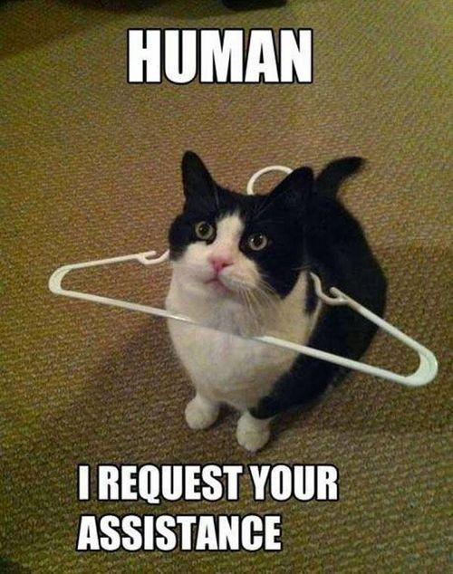 cat memes 15