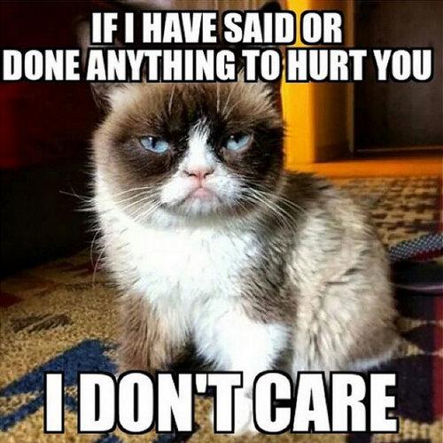 cat memes 17