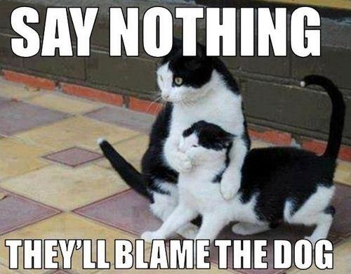 cat memes 24
