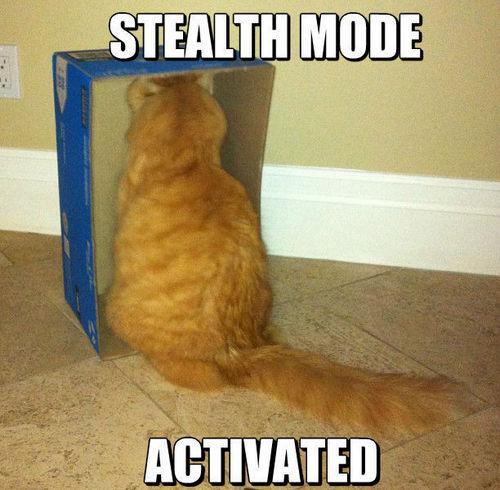 cat memes 25