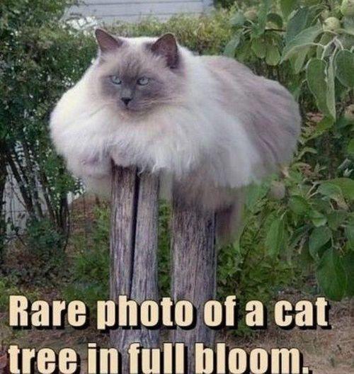 cat memes 26