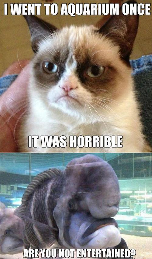 cat memes 28