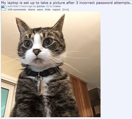 cat memes 29