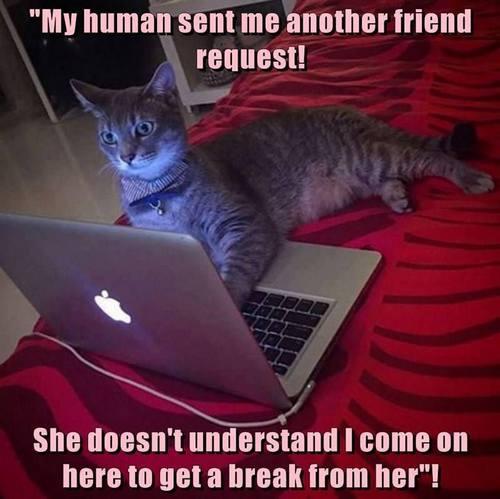 cat memes 32