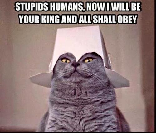 cat memes 34