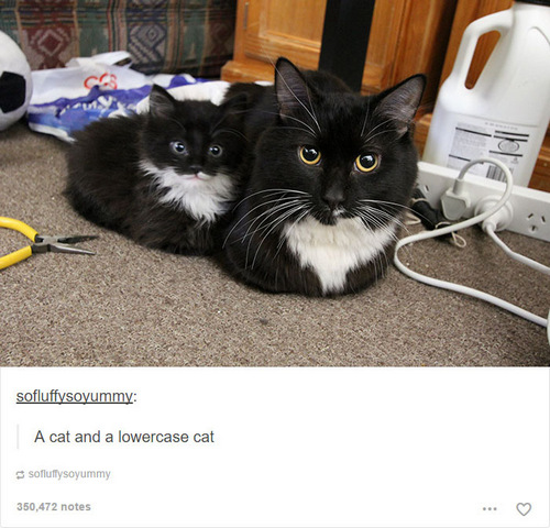 cat memes 35