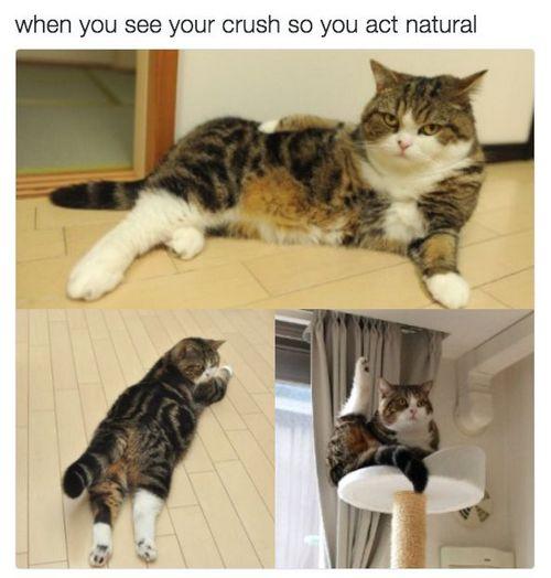 cat memes 39