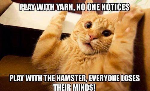 cat memes 4