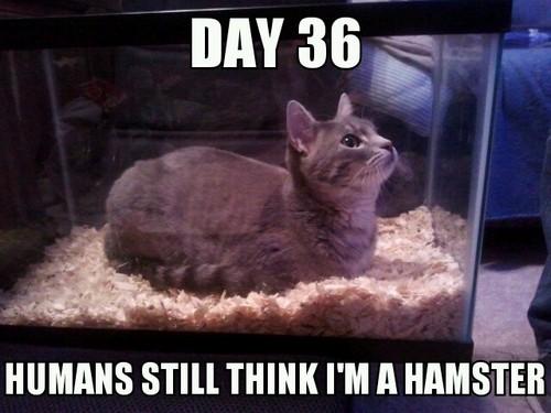 cat memes 48