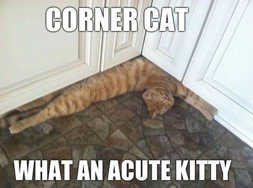 cat memes 49