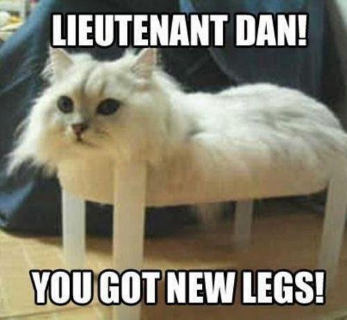 cat memes 5