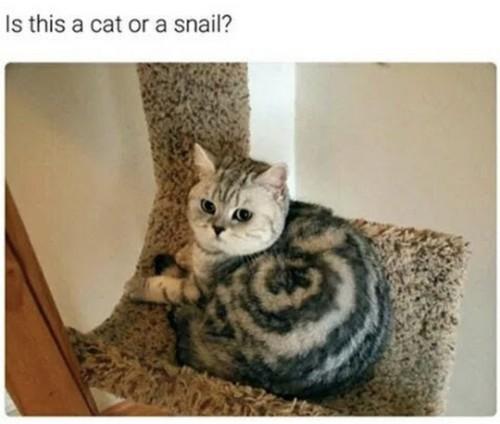cat memes 9