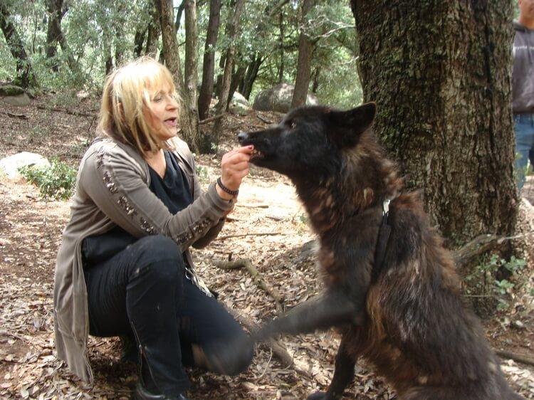 do wolfdogs make good pets 9
