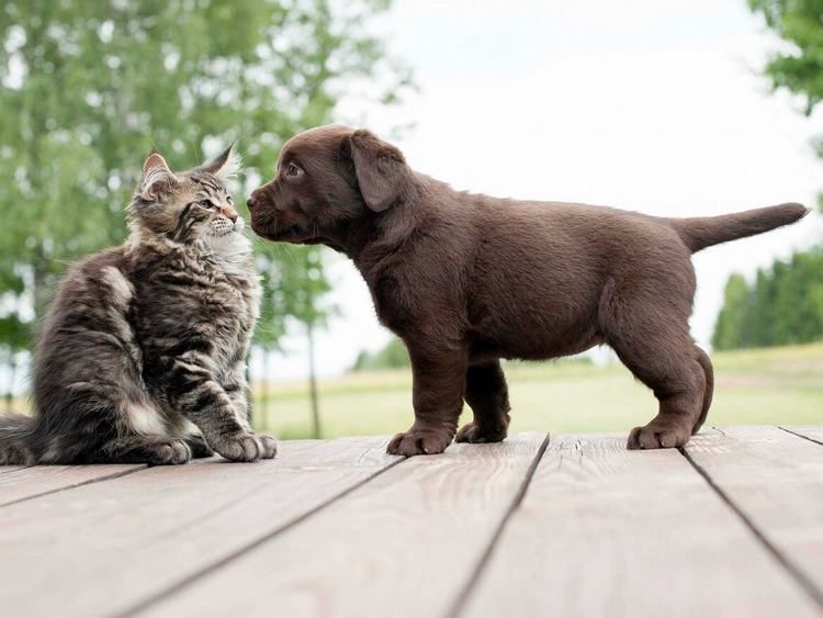 introduce your kitten to your dog 6