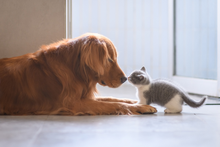 introduce your kitten to your dog 9